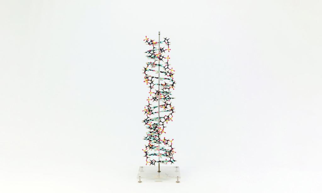 生命の設計図・DNAから複雑な組織ができるまで
